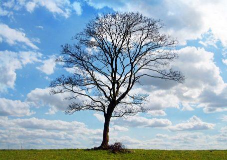tree-164915_960_720