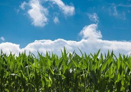 земеделски застраховки